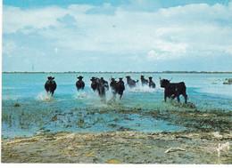 CAMARGUE MANADE DE TAUREAUX DANS LES MARAIS (dil90) - Bull