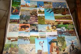 LOT DE 36 CARTES  ETATS-UNIS....ANIMAUX - 5 - 99 Postcards