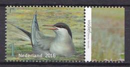 Nederland - Griend: Vogels Van Het Wad - Visdief - MNH - NVPH 3408 - Sonstige
