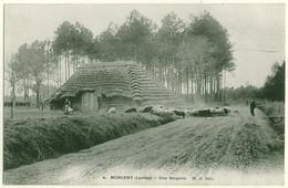 40 - B16902CPA - MORCENX - MORCENT - Une Bergerie, Troupeau De Moutons, Carte Pionnière - Parfait état - LANDES - Morcenx