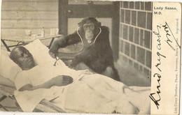 ANIMALS  MONKEY  LADY SASSA MD   LISK CAREW SERIES SIERRA LEONE - Monkeys