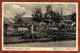 Bad Duerrenberg, Rosarium (97961) - Other
