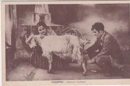 PS / ITALIE (Folklore) PALERMO Costumi Siciliani ( Couple De Siciliens Trayant Une Chèvre) - Palermo