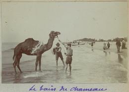 Le Bain Du Chameau Aux Saintes-Maries-de-la-Mer. Camargue. 1909. Album De L'historien Gérard De Beauregard. - Luoghi