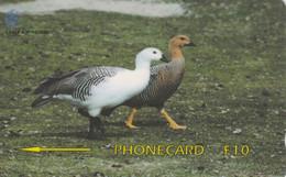 PHONE CARD FALKLAND (E65.13.3 - Islas Malvinas