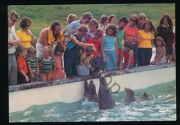 Texel - Natuurrecreatiecentrum - Het Voederen Van De Zeehonden [AA47 6.349 - Ohne Zuordnung