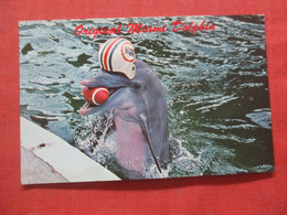 Original  Miami  Dolphin     Ref 4411 - Dolphins