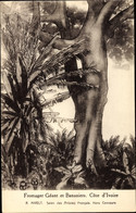 Artiste CPA Nivelt, R., Elfenbeinküste, Fromager Géant Et Bananiers - Sud Africa