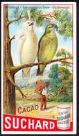 CHROMO Chocolat SUCHARD   Cotinga Oiseaux Birds     Serie 186 - Suchard