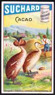 CHROMO Chocolat SUCHARD   Plongeon   Oiseaux Birds     Serie 186 - Suchard