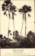 Artiste CPA Nivelt, R., Senegal, Brousse, Palmiers Rôniers - Senegal