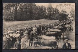 33 - Porchères - Vue Générale Du Concours Agricole ( Section Bétail ) - Altri Comuni