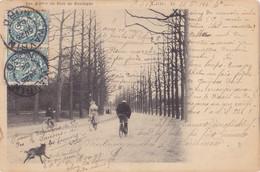 Lille (59) - Les Allées Du Bois De Boulogne - Lille