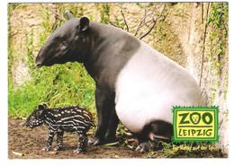Germany - Leipzig - Zoo - Tierpark - Tapir - Non Classificati