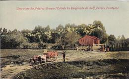 Uma Vista De Pelotas Granja (Estado Do Rio Grande De Sul) Parque Pelotense - Unclassified
