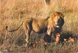 FAUNE AFRICAINE - Le Repas Du Lion - Carte Datée De 1971 - Leeuwen