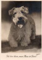DC4263 - AK Ich Bin Klein Mein Herz Ist Dein - Süßer Hund, Dog - Sealyham-Terrier - Hunde