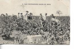 VENDANGES Dans Le Midi - Vines