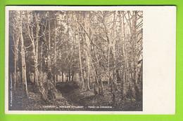 CHAUMONT : Fontaine Sainte Libert, Forêt De Corgebin. TBE. Carte Photo. Dos Simple. 2 Scans. Edition Maillefert - Chaumont