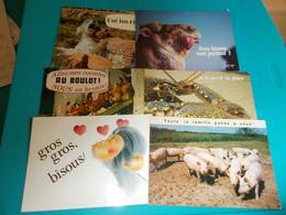 ANIMAUX HUMOUR LOT DE + DE 160 CPSM / CPM - 100 - 499 Postcards