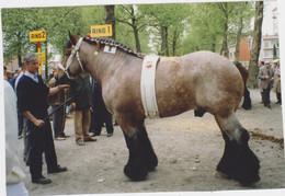 Vilvoorde - FOTO Van 1ste Prijs Paard Jaarmarkt 1993 - Eigenaar De Greeff, Elewijt (stamboom Achteraan Op Foto) - Vilvoorde