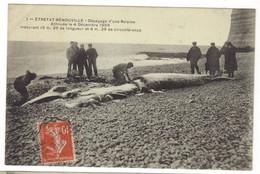 1- ETRETAT- BENOUVILLE - Dépeçage D'une Baleine échouée Le 4 Décembre 1909 - Etretat