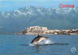 Animaux - Dauphins - Baie De Calvi - Corse - CPM - Voir Scans Recto-Verso - Dolfijnen