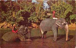 Animaux - Eléphants - Elephants Bathing - Kandy - Ceylon - CPM - Voir Scans Recto-Verso - Elephants