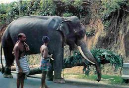 Animaux - Eléphants - Sri Lanka - Elephant At Work - CPM - Voir Scans Recto-Verso - Elephants