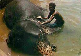 Animaux - Eléphants - Sri Lanka - Elephants' Bath - Katugastota - Working Elephant Given Its Daily Bath - CPM - Voir Sca - Elephants