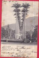 Cachet BUENOS AYRES (Buenos Aires) à BORDEAUX -  LO N° 4 - Sur CP Précurseur Rio De Janeiro Jardim Botanico - Maritieme Post