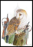 Cartes Maximum / Maximumkaart Blanco ** - BUZIN - Chouette Effraie / Kerkuil / Schleiereule / Barn Owl / Dame Blanche - Other