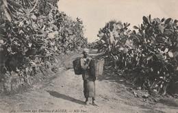 Algérie R Un Chemin Aux Environs D'alger Figues De Barbaries - Unclassified