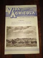 "Revista Portuguesa Bimestral Nº 146 Year 1961 ""VIDA AGRICOLA"" Capa, Pastagem Alentejana - Portalegre - Boeken, Tijdschriften, Stripverhalen"