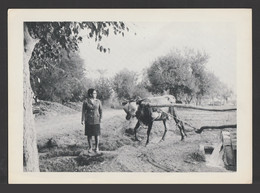 Egypt - Rare - Vintage Original Photo - Umm Kulthum - Famous Singer - As Scan - 23x16.5 Cm - Briefe U. Dokumente