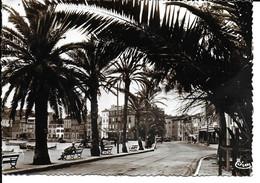 """SANARY """" Avenue Des Palmiers , Belle Carte """"   N°  2260 - Sanary-sur-Mer"""