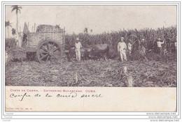 Cuba.- Corte De Canna : Gathering Sugarcane. - (belle Animation : Oblitération De 1903) - Cuba