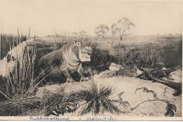 L55B213 - Hippopotame Et Crocodiles -  Galerie Du Duc D'Orléans - E.Baudelot N°1 - Altri