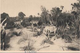 L55B215 - Gazelles - Galerie Du Duc D'Orléans - E.Baudelot N°4 - Altri