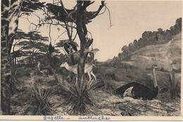 L55B217 - Gazelle Et Autruches - Galerie Du Duc D'Orléans - E.Baudelot N°8 - Altri