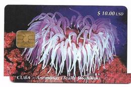 CUBA, Used Chip Phonecard, In Perfect Condition. Anémonas, # Cuba-20 - Cuba