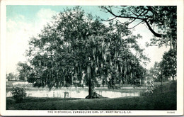Louisiana St Martinville The Historic Evangeline Oak Curteich - Other