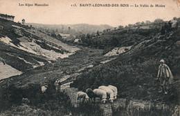 St Saint-Léonard Des Bois (Alpes Mancelles, Sarthe) La Vallée De Misère, Berger Et Ses Moutons - Carte N° 113 - Saint Leonard Des Bois
