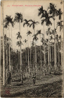 CPA AK VIETNAM THUDAUMOT - Plantation D'Aréquiers (61583) - Vietnam