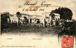 PC CPA URUGUAY, ESCENAS CAMPESTRES 1908, Vintage Postcard (b20526) - Uruguay