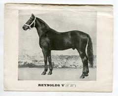 CHIEVAUX De Courses Du Haras De FLEURIEL  3 Fiches Pédigrés Pour URIEL V ,  REYNOLDS V Et NORBERT   D18 2020 - Paarden