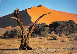 NAMIBIE NAMIB DESERT Namibia  10 (scan Recto Verso)MF2722BIS - Namibia