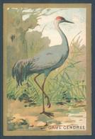 Lot De 14 Chromos Oiseaux  Birds 7 X 10.5 Cm - Ohne Zuordnung