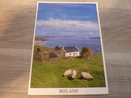 THE GREAT BLASKET ISLAND - CO KERRY - IRELAND - - Wicklow