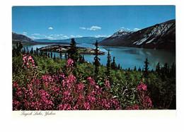 YUKON, Canada, Tagish Lake, Old 4X6 Chrome Postcard - Yukon